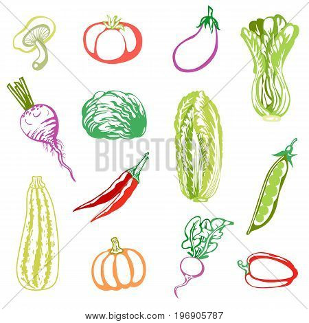 Various vegetables. Collection of colored sketches of cabbage, pea, pepper, eggplant, radish, tomato, pumpkin, mushroom, red beet, marrow squash. Vector illustration.