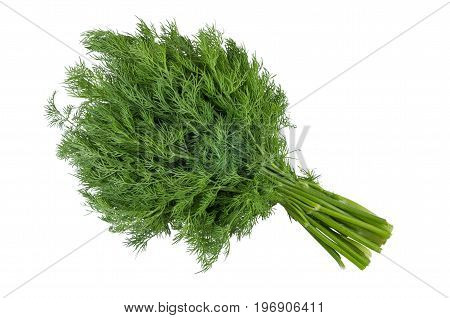 Bunches Of Dill Isolated On White