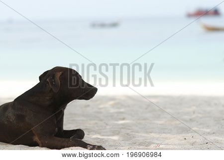 Poor Homeless Dog sitting on the beach looking outside