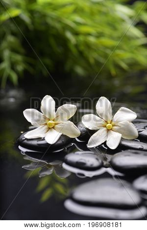 Still life with two gardenia and plant with therapy stones