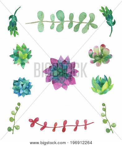 Hand drawn watercolor succulent plants isolated on white background. For invitations, greeting cards, posters, packing and more