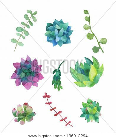 Hand drawn watercolor succulent plants isolated on white background