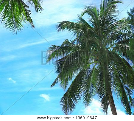 Green palms against blue sky at tropical resort