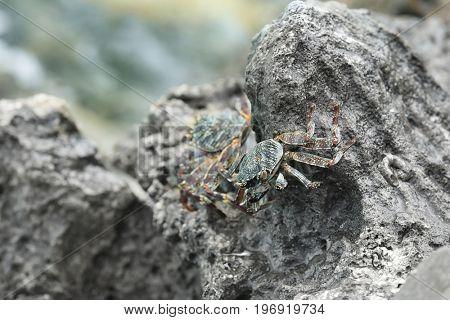 Small crabs on rock at sea resort