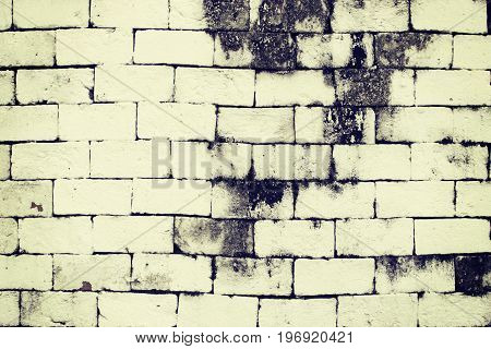 White brick weathered wall texture black moss stain of stonework.