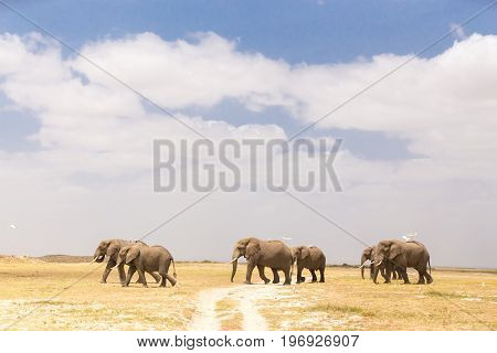Herd of elephants crossing dirt road at Amboseli National Park, formerly Maasai Amboseli Game Reserve, is in Kajiado District, Rift Valley Province in Kenya.