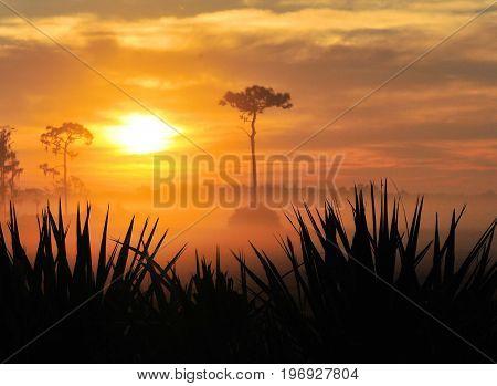 Sunrise near Joe Overstreet Landing near Kissimmee, FL
