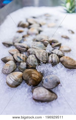 Whole Raw Clams On Ice On Display In Market