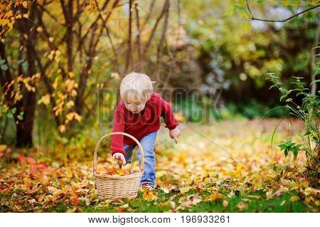 Toddler Having Fun In Autumn Park/forest