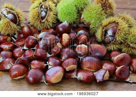 Chestnuts and husks after harvesting during autumn