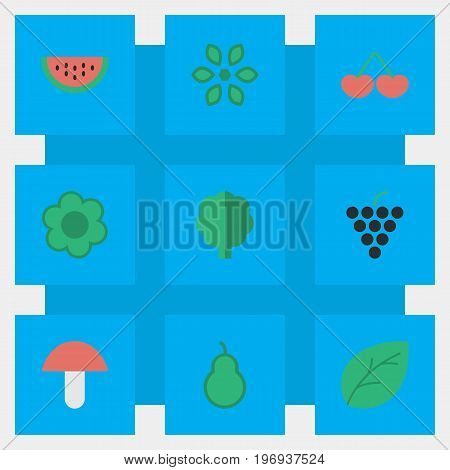 Elements Berry, Flower, Punching Bag And Other Synonyms Grape, Melon And Fruit.  Vector Illustration Set Of Simple Gardening Icons.