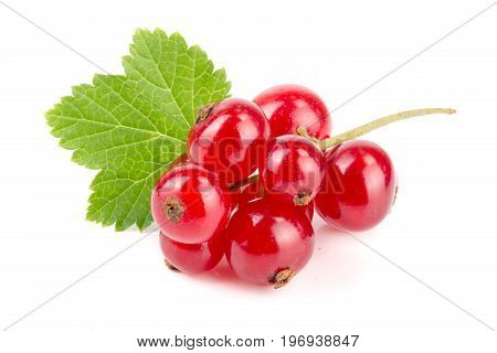 Red currant berries with leaf isolated on white background.