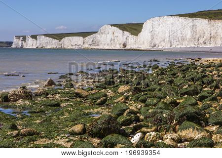 A view of the beautiful Seven Sisters chalk cliffs in East Sussex UK.