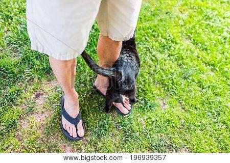 Black Cat Rubbing Against Male Person's Legs