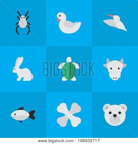 Elements Kine, Skeleton, Perch And Other Synonyms Tortoise, Bear And Bunny.  Vector Illustration Set Of Simple Fauna Icons.