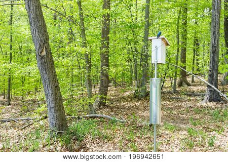 Bright Blue Tree Swallow Bird Sitting On Feeder In Forest Park In Spring