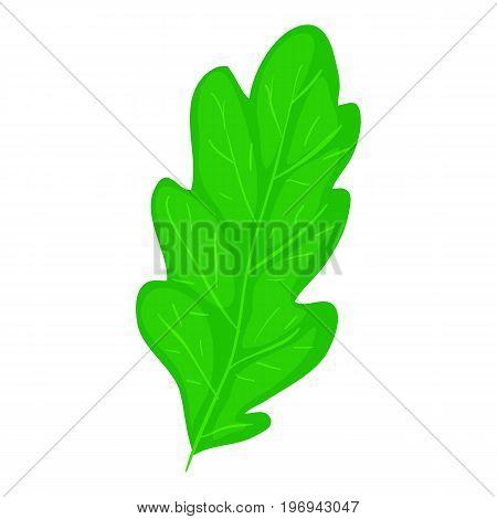 Oak leaf icon. Cartoon illustration of oak leaf vector icon for web on white background