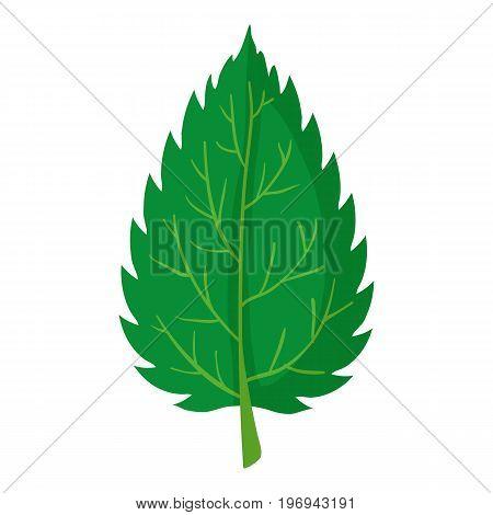 Nettle leaf icon. Cartoon illustration of nettle leaf vector icon for web on white background