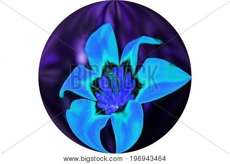 Blue Flower In Sphere High Quality Stock Photo