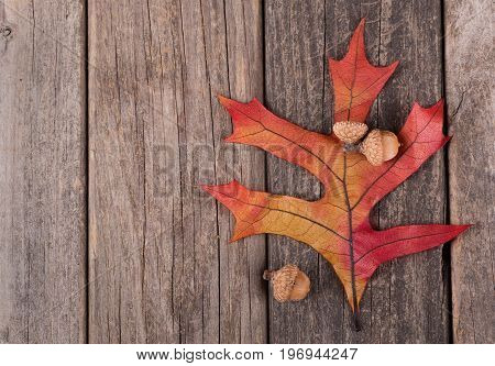 Colorful oak leaf and acorns on a wooden surface