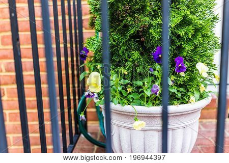 Pansy Flower Pot Behind Metal Fence And Brick Wall On Outside Patio Decoration