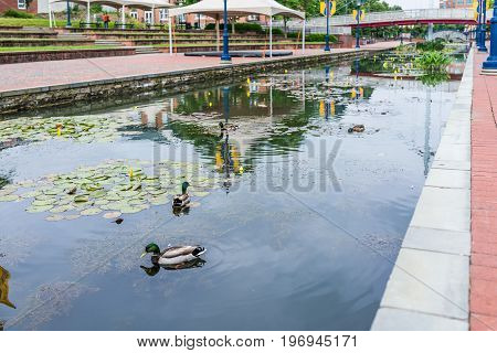 Frederick, Usa - May 24, 2017: Carroll Creek In Maryland City Park With Canal, Reflection And Ducks