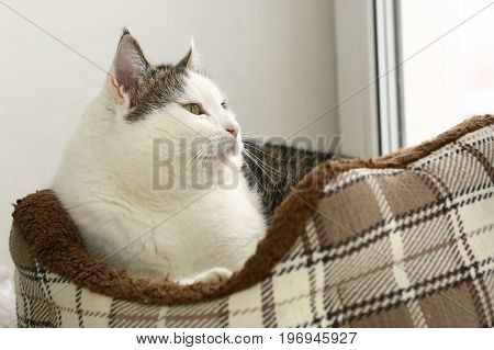 Cat In Cosy Pet Bed Close Up Photo