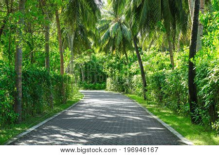 Beautiful alley with tropical plants in botanical garden
