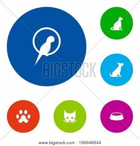 Collection Of Dish, Sitting, Cat And Other Elements.  Set Of 6 Mammal Icons Set.