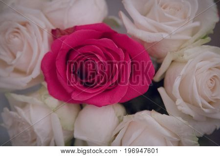 Macro beautiful white roses bouquet pink flower midle