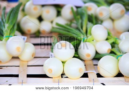 Fresh white onion close-up. Onion wih green top on wooden box.