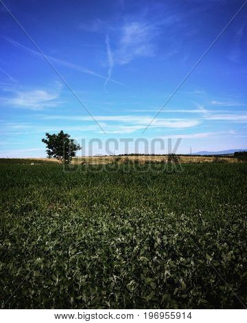 Lonely tree in a field on a windy day in Austria