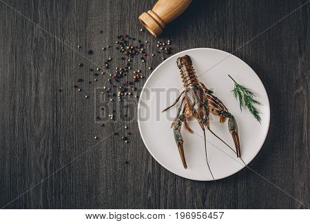 Food concept. One big green fresh crawfish on white plate with green herbs. Black and white pepper grains around. Gray wooden table background. Instagram vintage toning effect. Top view. Copy space
