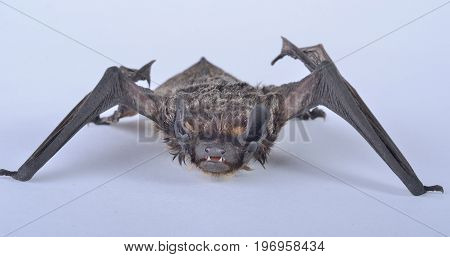 A close up of the small bat.