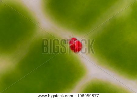 Green leaf plants cells background find with microscope.