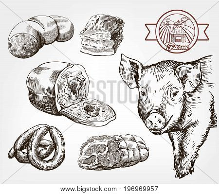 The head of a pig. Natural meat products. Animal husbandry. Set of vector sketches against gray background