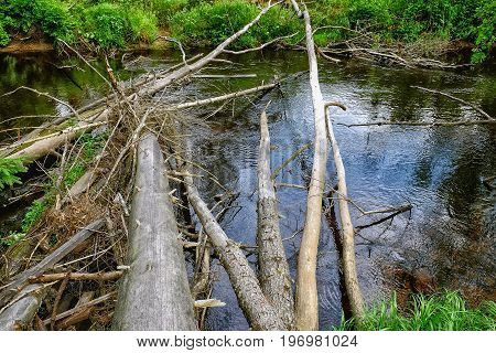 a small beautiful river in the forest