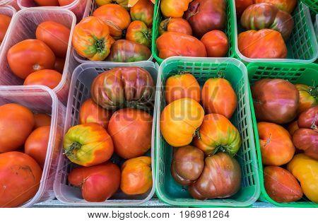 Organic Fresh Yellow, Red, And Orange Tomatoes