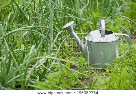 Steel made silver colored watering can. Galavanized steel watering can on grass in the garden.