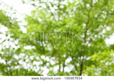 Blurred spring tree branch. Green natural background of out of focus forest or bokeh.