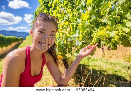 Vineyard winery tourist woman grape picking. Harvest farming to make white wine. Asian girl hand showing holding bunch of green grapes on grapevine. Woman in Marlborough region, New Zealand.
