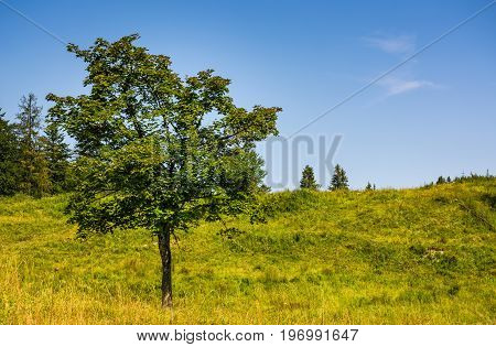 Tree On A Mountain Grassy Hill Side