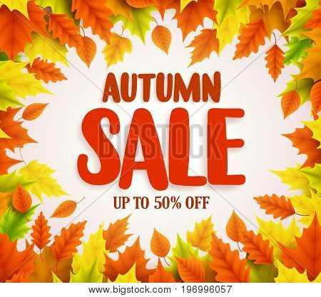 Autumn sale vector banner design with autumn sale text in white background and collection of fall seasonal orange and yellow maple leave boarder frame. Vector illustration.