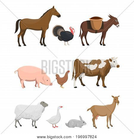 Vector illustration set of farm animals such as horse, turkey-cock, donkey, pig, chicken, cow, ewe, goose, rabbit and goat on white background.