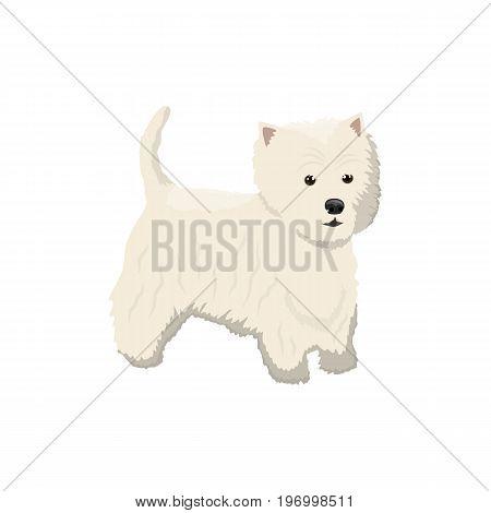 Vector illustration of Lapdog standing on white background.