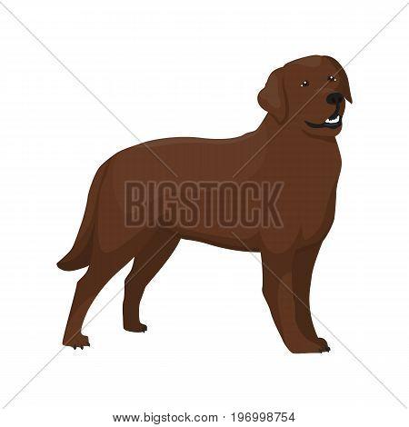 Vector illustration of Labrador standing on white background.