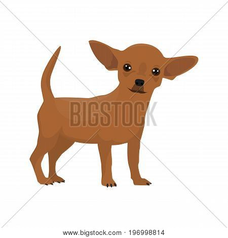 Vector illustration of Chihuahua standing on white background.