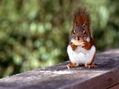 Squirrel sitting with a Peanut poster