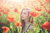 pretty woman or girl with long curly hair hold flower in field of red poppy seed with green stem on natural background summer spring drug and love intoxication opium poster