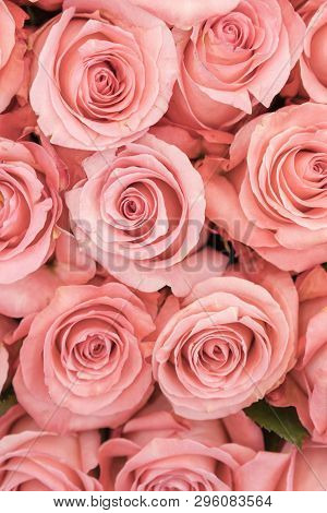 Background Of Pink And Peach Roses. Fresh Pink Roses. A Huge Bouquet Of Flowers. The Best Gift For W